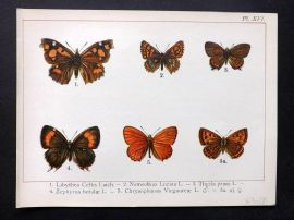 Joanny Martin 1902 Antique Butterfly Print 16